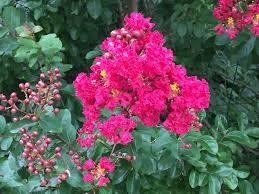 fiori